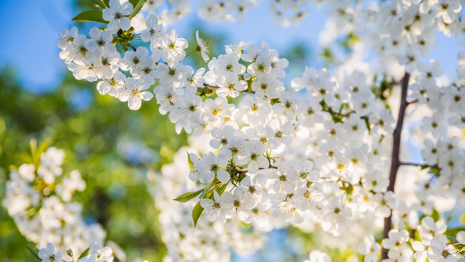 flores - A árvore